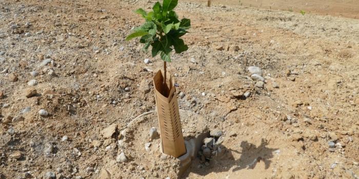 Reforestation on Steroids (ITA)