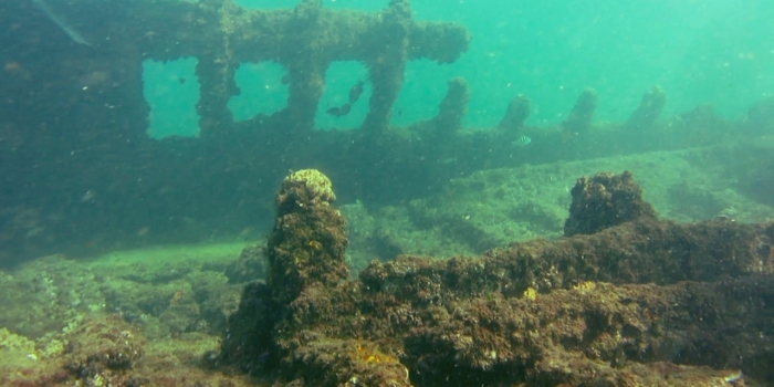 Artificial Reefs (CPV)